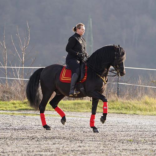 Andalusier brandzeichen Pferderasse Andalusier